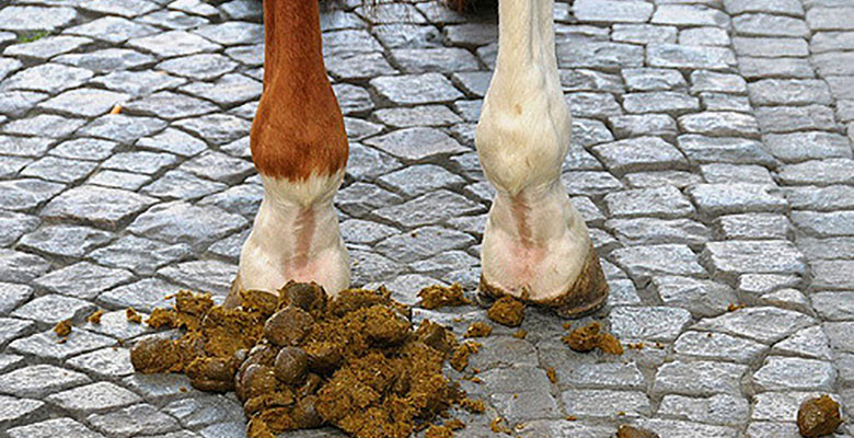 Image result for horse shit